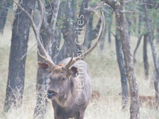 Ranthambhore preserve 556