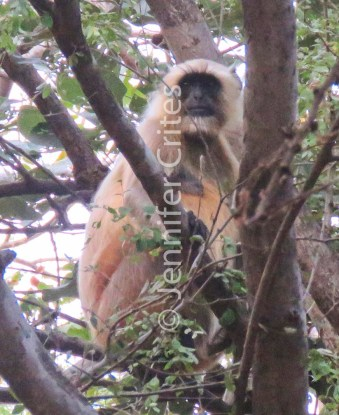 Ranthambore preserve 561