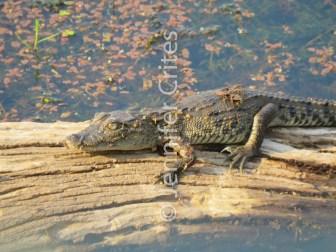 Ranthambore preserve 596