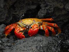 Crab Mentality