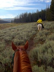 photo of horses in Yellowstone