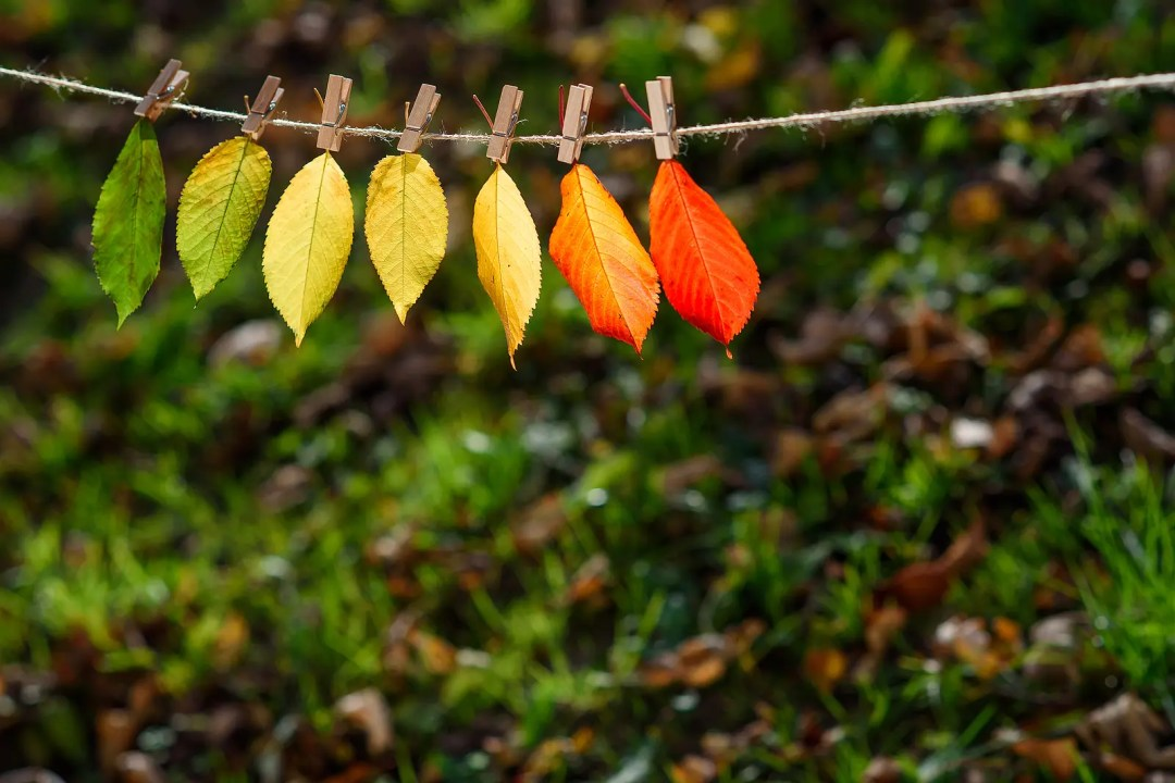 Leaves are hanging on a wire. This reflects concepts discussed in divorce recovery in DFW with Rethink Therapy. Jennifer, the next steps therapist in Dallas, TX is a skilled counselor in Lake Highlands 75214