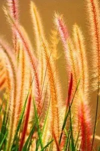 {Cattails at sunset color me impressed}