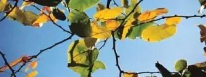 leaves-slider