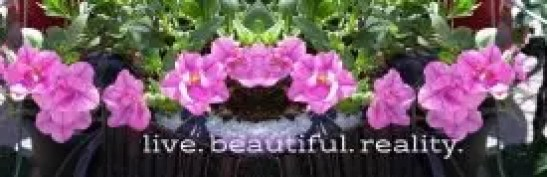 cropped-dreampurple-flower-banner.jpg