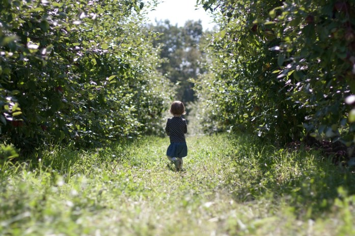 9c671-applepicking_jenniferjohnson_2