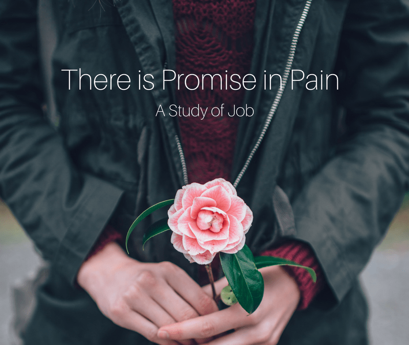 There is Promise in Pain (Week Thirteen)