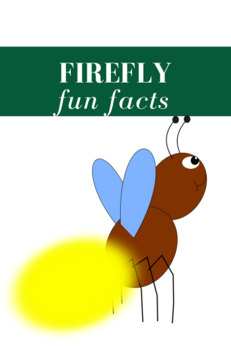 Fireflies: A Philadelphian Birthright