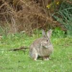 35 Most Relevant Quotes Against BigTech Rabbit Holes