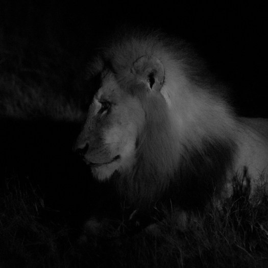 20150805_Lions at night-11