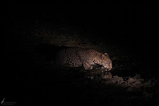 6pm - Leopard