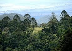 Bunya Mountains 1