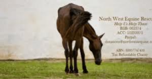 North west equine rescue