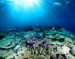 Barrier Reef 1
