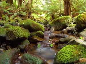 Liffey Valley Reserves in Tasmania – the first Bush Heritage Reserve. Photo: Wayne Lawler
