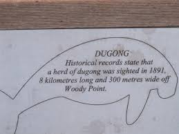 Dugongs 2