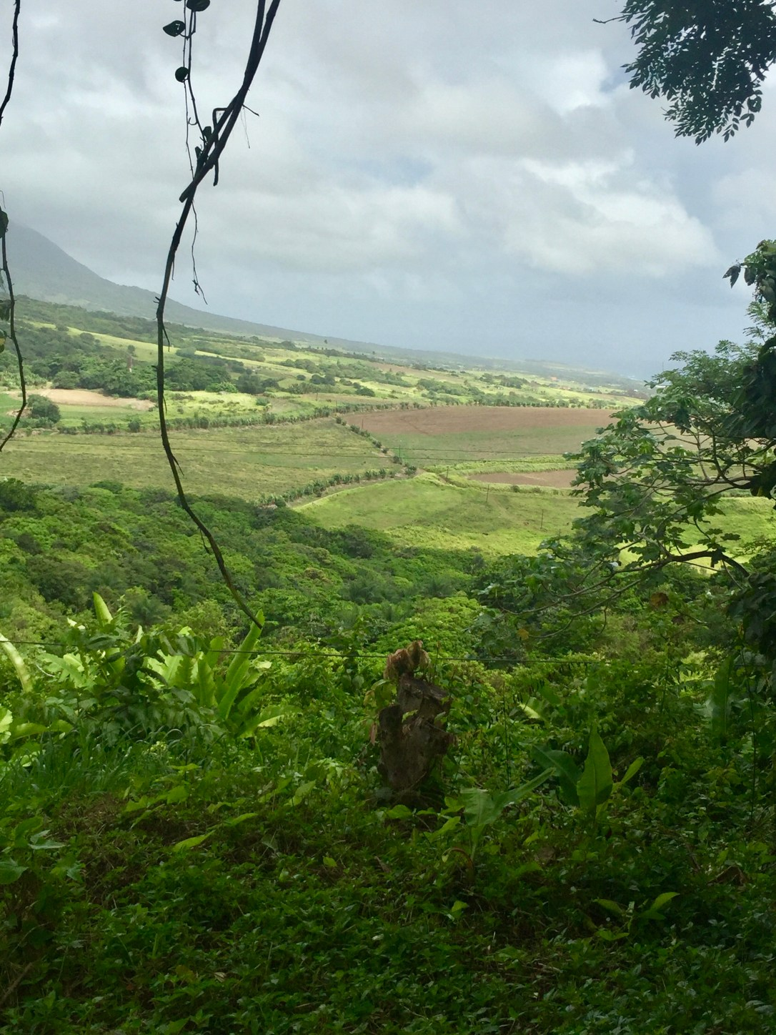 st kitts from the mountain