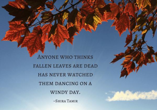 fallen leaves meme