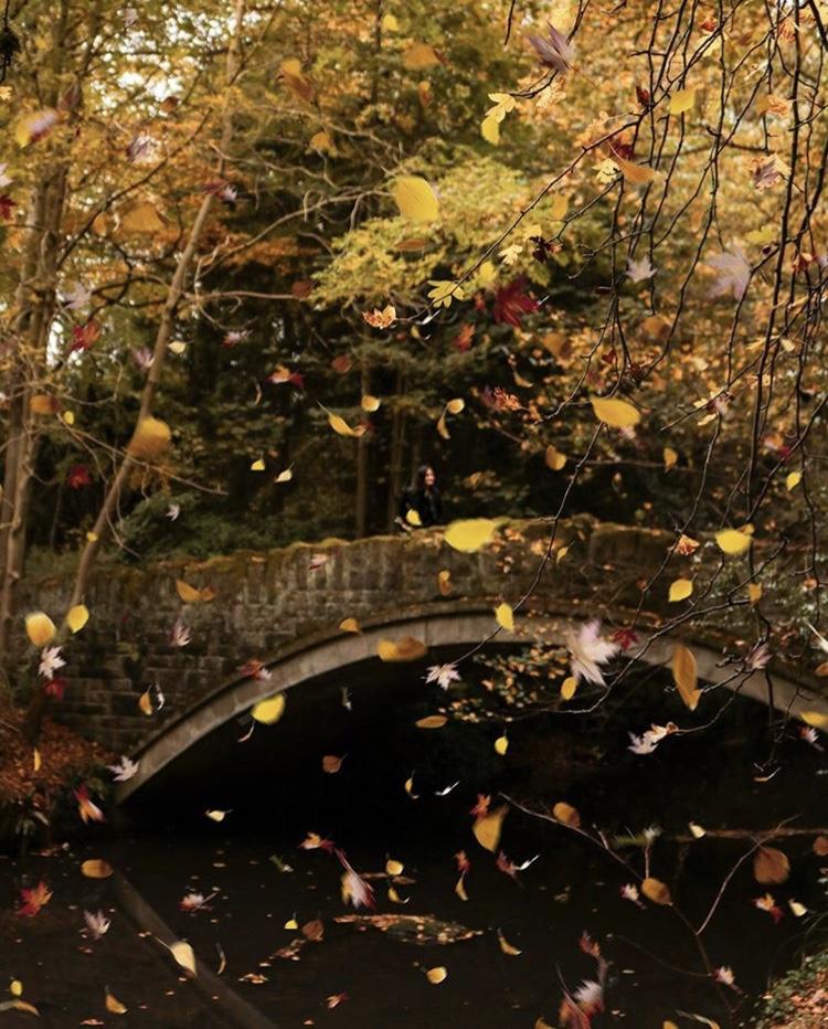 falling leaves instagram
