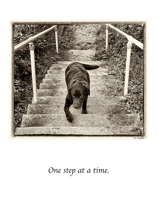 Beholder_Kupka_Skip_steps