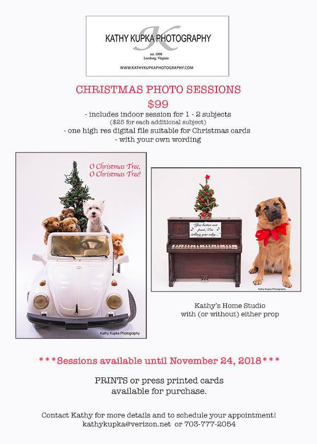kupka 2018 christmas photo session