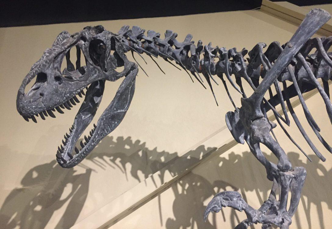 T-Rex - Oasis Disturbance Adventure