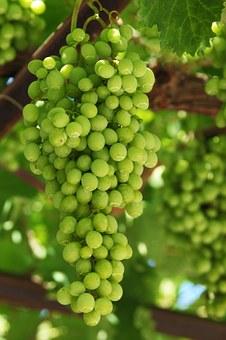 grapes-16801__340