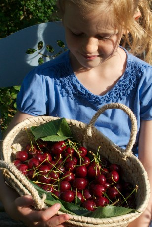 Imi with cherries