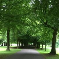 Beech avenue, Clifton - Jenny Chandler Blog