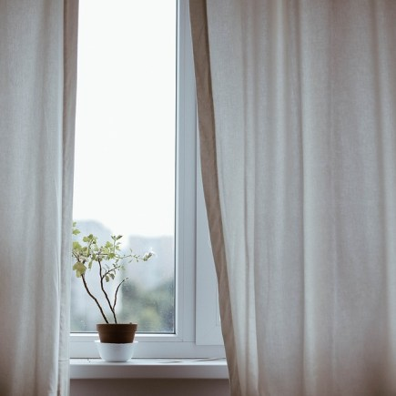 Home improvements for the whole family: A window with a thin curtain and a small plant