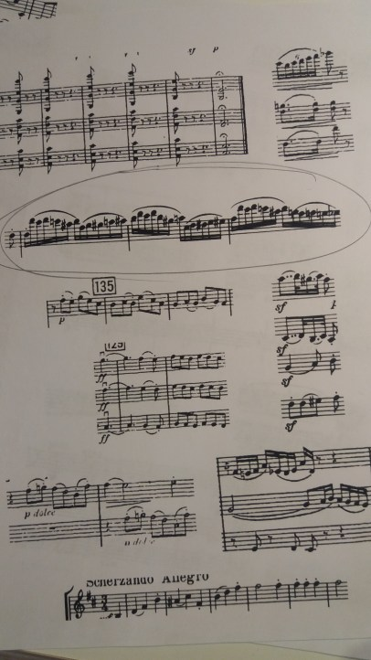 The melodic extract (circled) from the Haydn that my piece is currently based on: violin 1, 3rd Mvt.