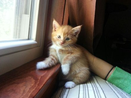 The cutest little kitty, Simba.