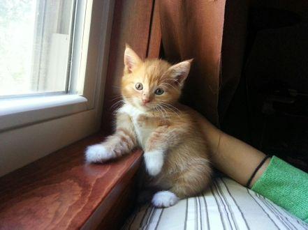 The cutest little kitty, Simba.