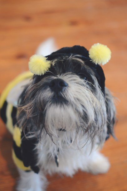 Halloween costumes - for the family pet via @jennyonthespot
