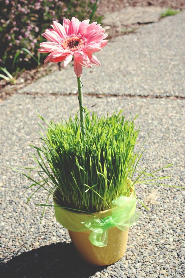 DIY Daisy Pots via @jennyonthespot
