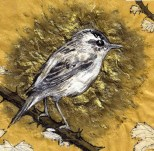 Sedge Warbler, ink and gold pigment painting, 2015