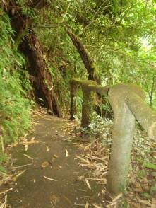 More trail
