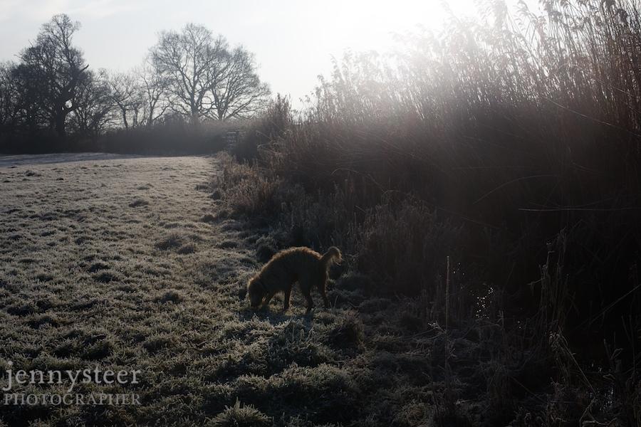 Animal, dog, bird, documentary photographs
