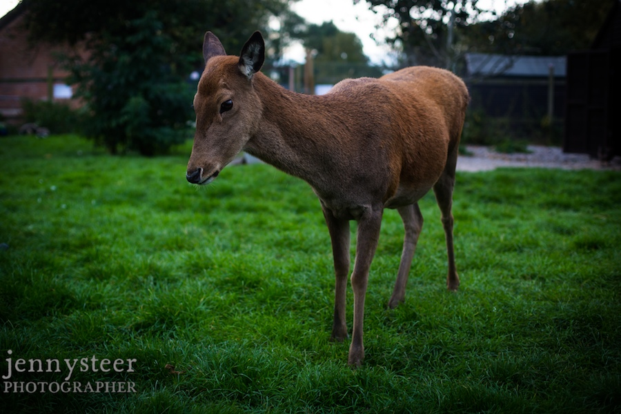 Secret-world-wildlife-rescue-photographer005