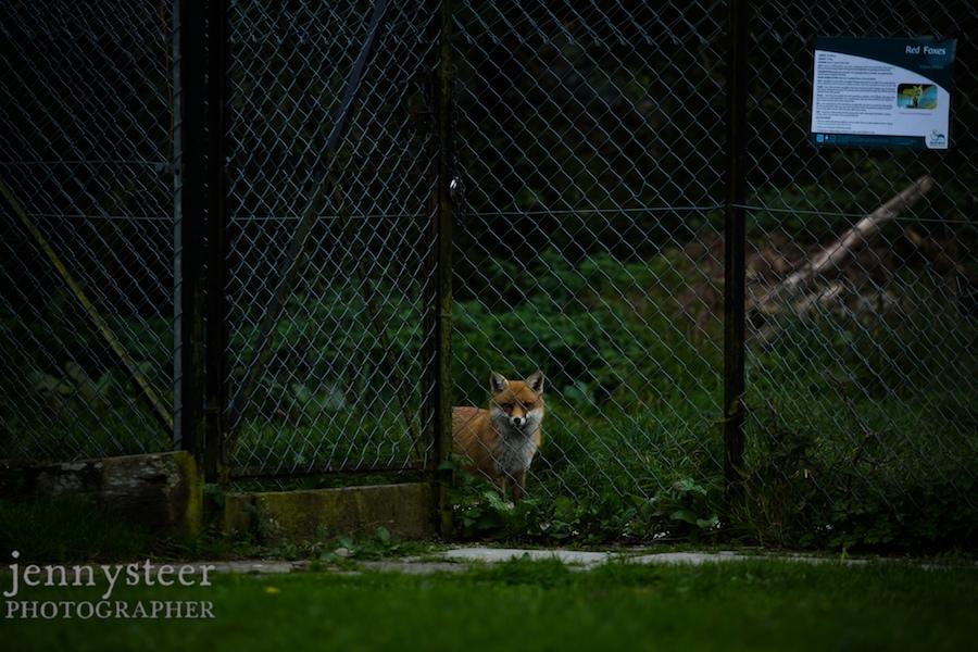 Secret-world-wildlife-rescue-photographer016
