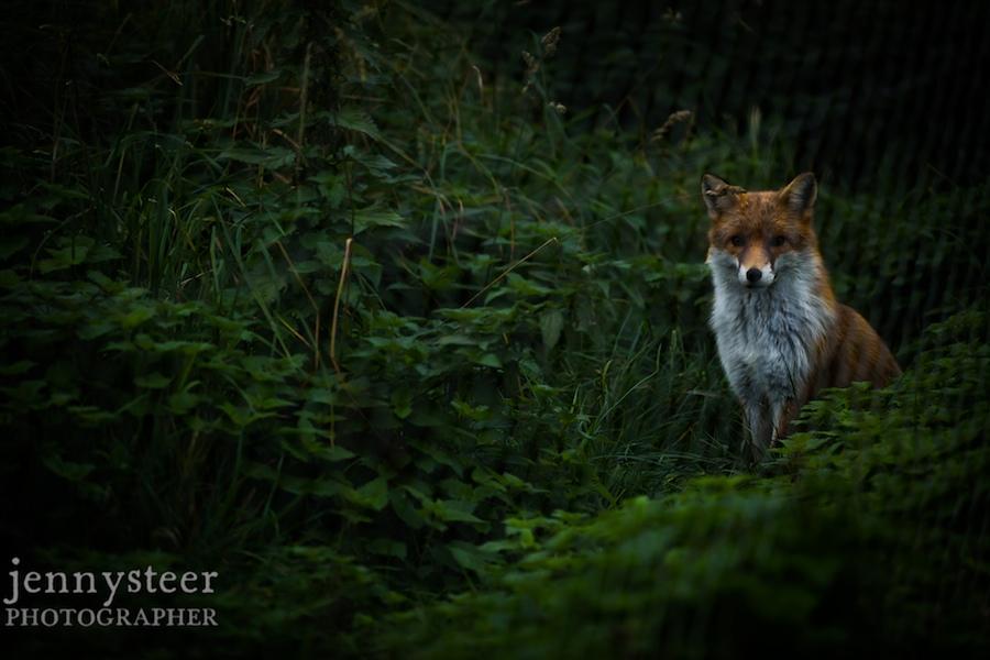 Secret-world-wildlife-rescue-photographer018