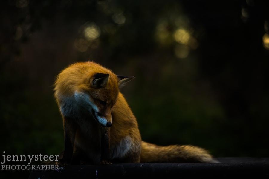 Secret-world-wildlife-rescue-photographer034