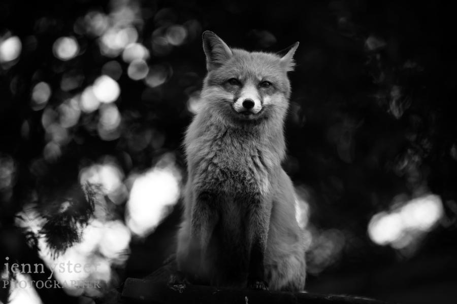 Secret-world-wildlife-rescue-photographer038
