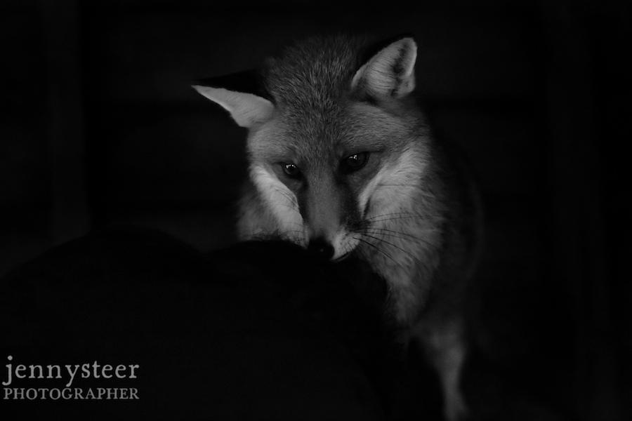 Secret-world-wildlife-rescue-photographer043