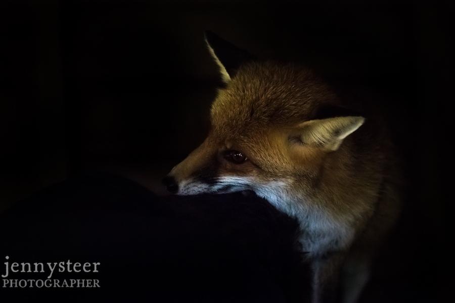 Secret-world-wildlife-rescue-photographer044