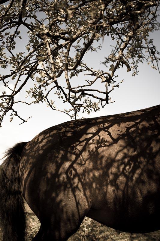 Dartmoor_Pony_photographer_001