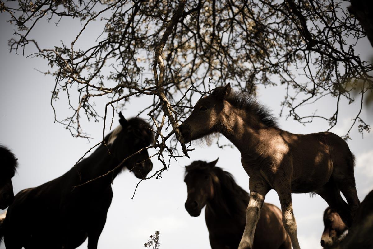 Dartmoor_Pony_photographer_002