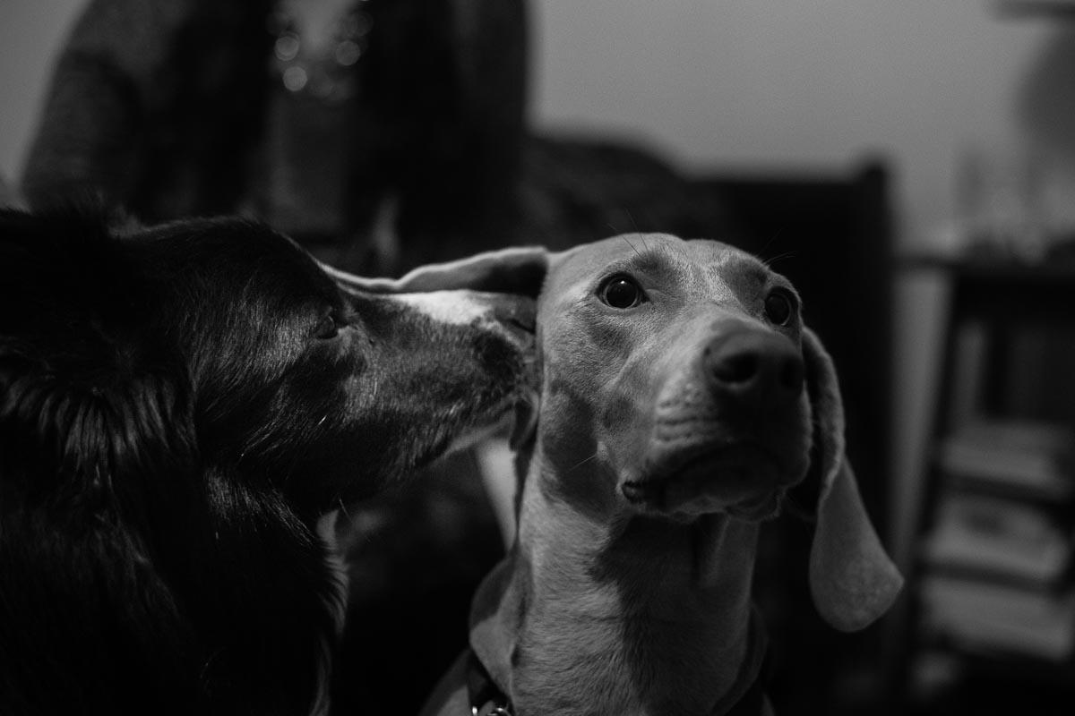 Documentary nature dog photographer photojournalist, Devon, Dorset, Cornwall, Somerset, Exeter, UK, abroad