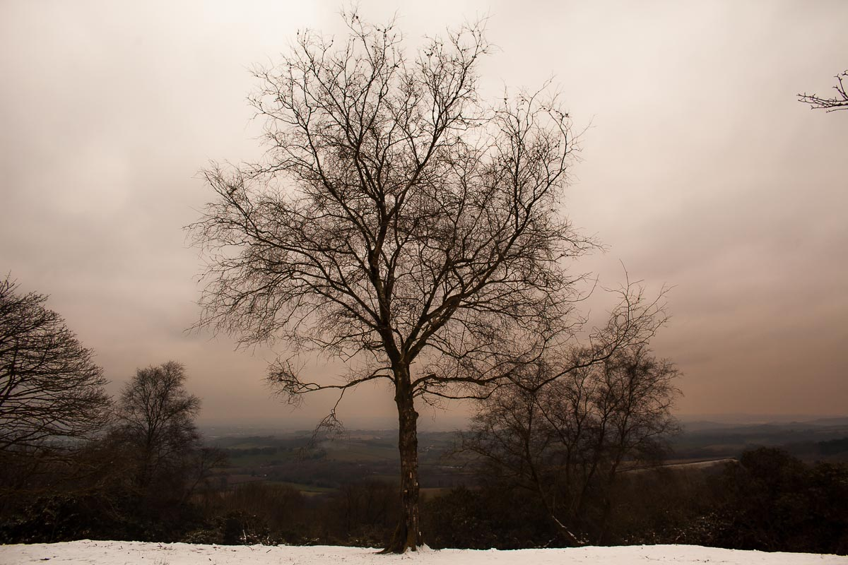 Haldon_Belvedere_nature_snow_photographer_002