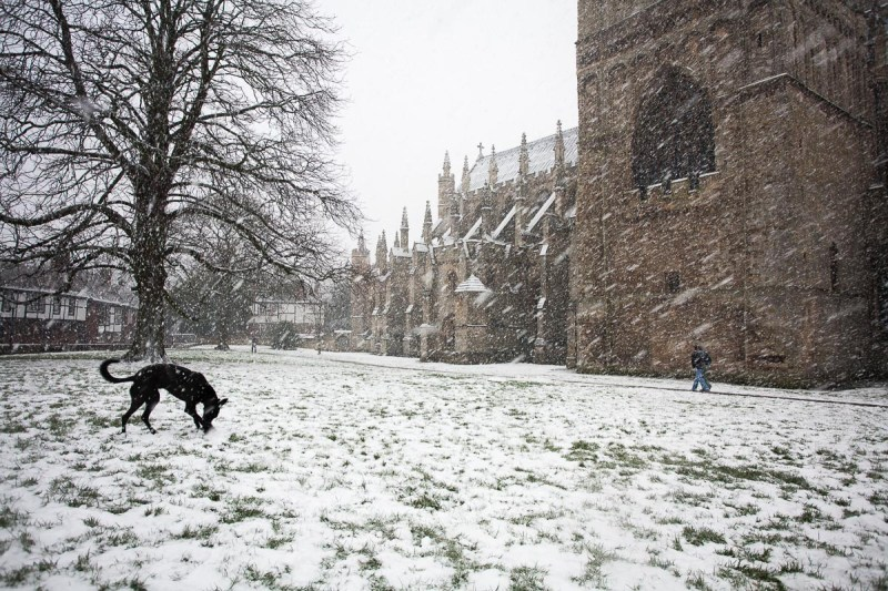 Black lurcher at Exeter Cathedral in the snow